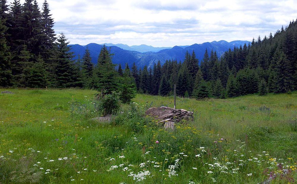 Какво прави прекрасната Родопа планина благотворна за човешкото здраве?